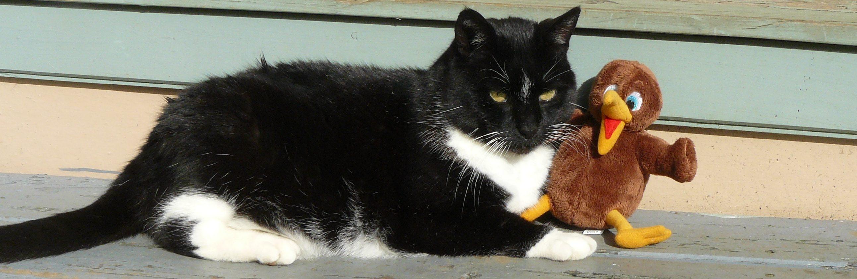 Brian, the school cat, and his Kiwi friend