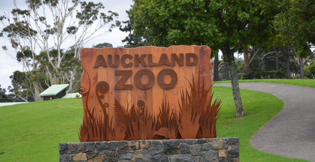 See A Kiwi At The Auckland Zoo Languages International
