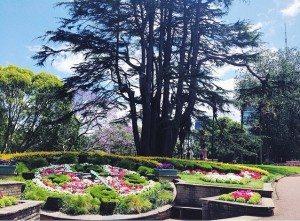 Albert Park in Auckland