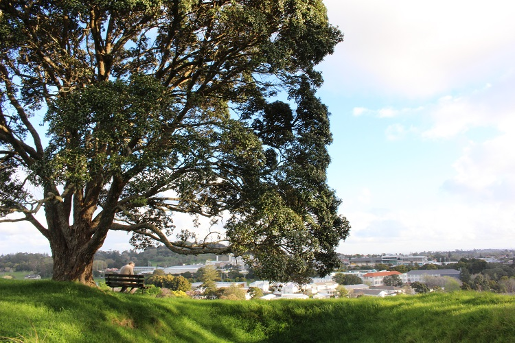 Park in Auckland New Zealand