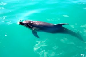 dolphin-cc-1024x682