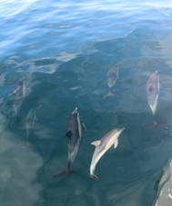 Photo: New Zealand dolphin pod