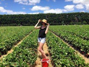 Strawberry Fields near Auckland
