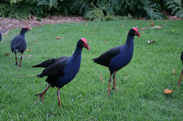 Western Springs Birds
